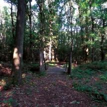 hmu-schinveldse-bossen-3-okt-2016-lammerdam